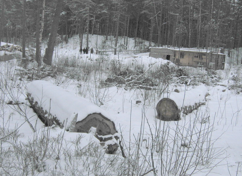 Останки спиленного леса на фоне времянки строителей коттеджей