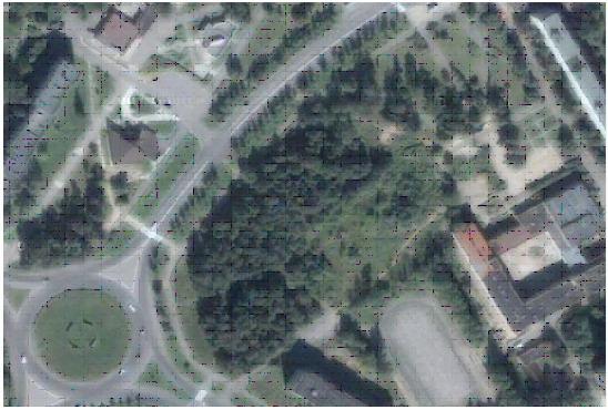 Так выглядит этот лес со спутника